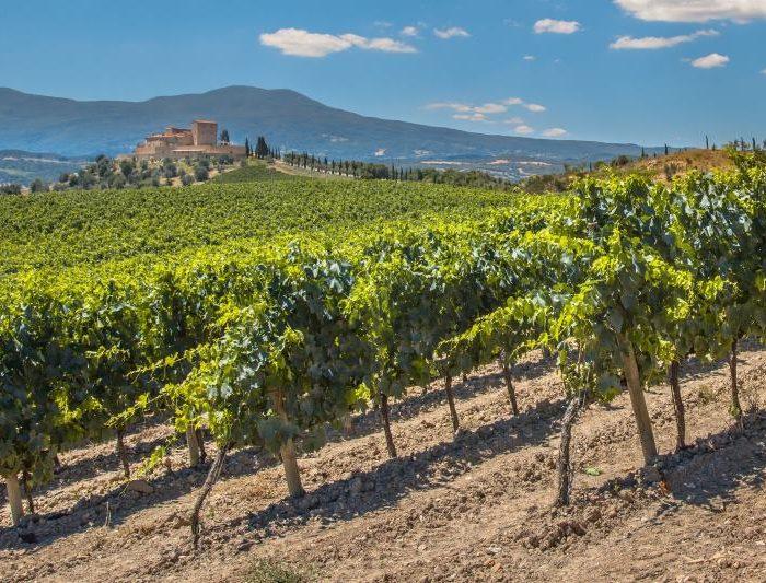 La Création de Vineyards-Bordeaux